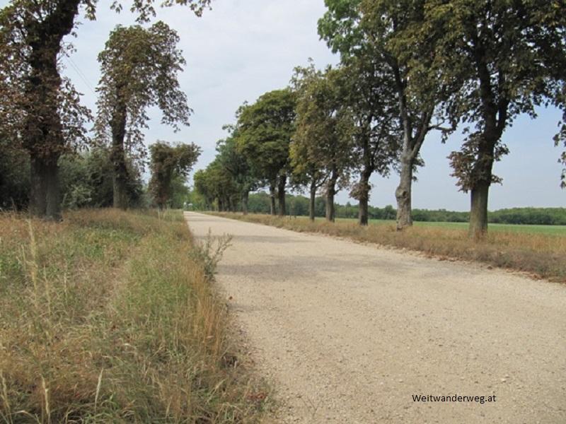Schotterstraße vor Halbthurn im Burgenland