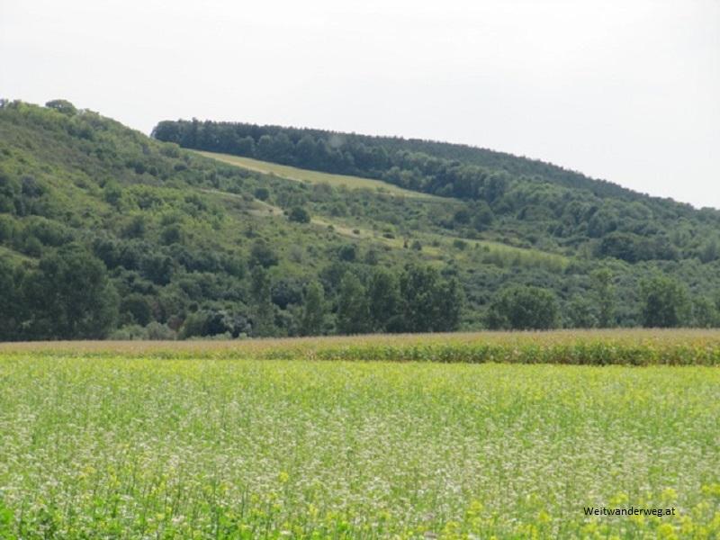 Hügellandschaft bei Siegendorf im Burgenland