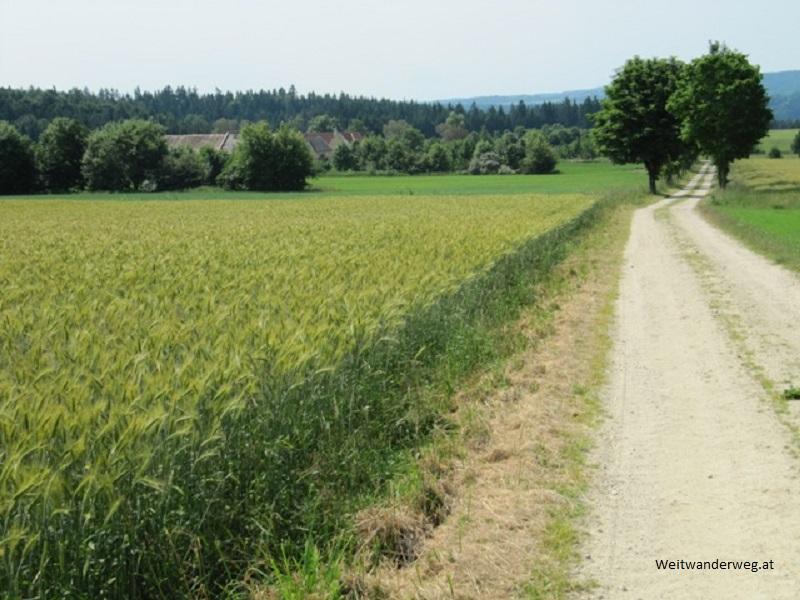 Landschaft bei Gmünd im Waldviertel, Niederösterreich