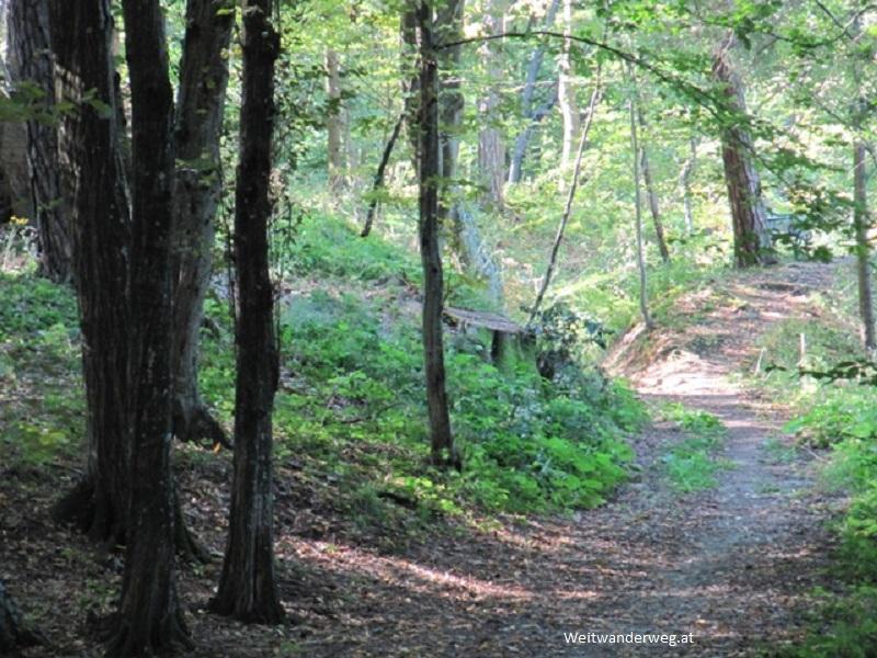 Waldweg zwischen Söchau und Fehring, Steiermark