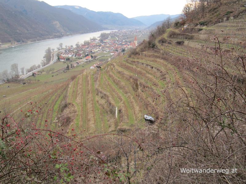 Weinberge an der Donau zwischen Dürnstein und Weissenkirchen im Februar