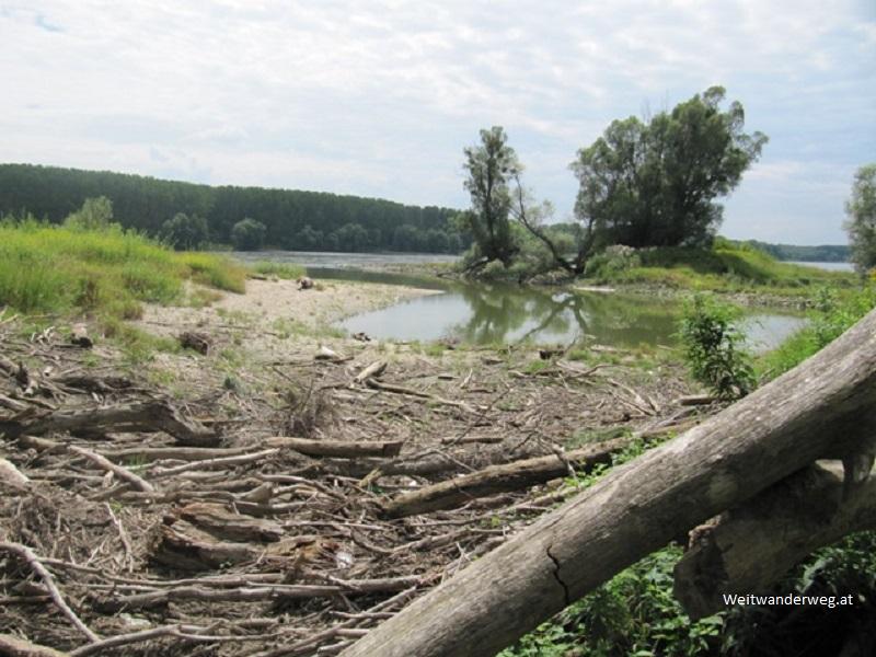 Die Donau zwischen Orth an der Donau und Eckartsau