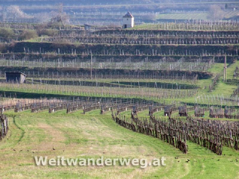 Wein-Kulturlandschaft bei Mautern an der Donau in der Wachau