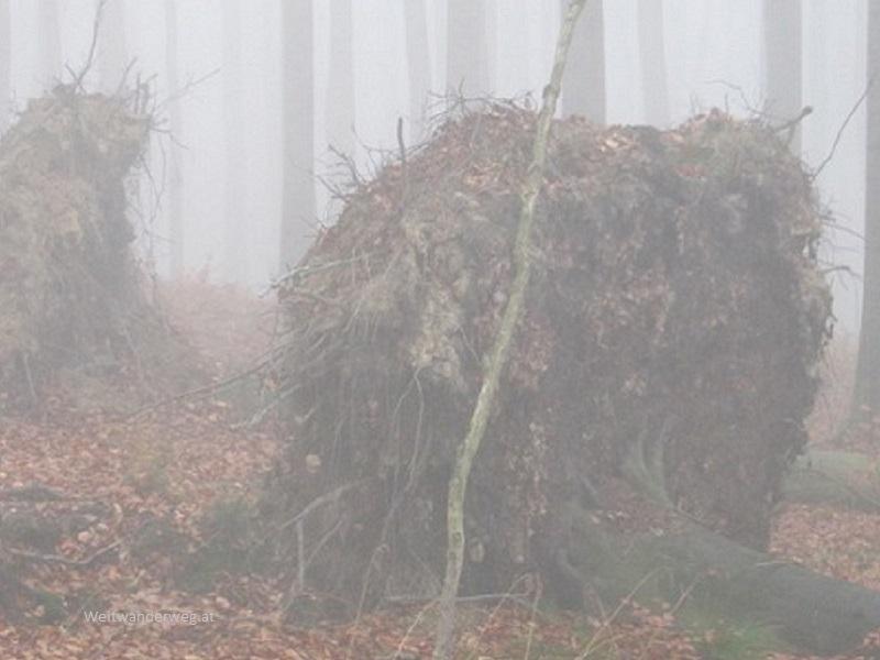 Nebelwald Wienerwald in Niederösterreich