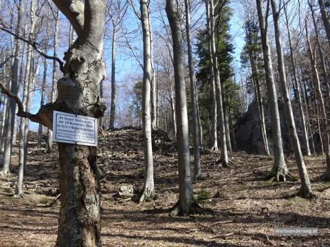 Wolfabschussstelle im Wald bei der Hohen Mandling, Niederösterreich