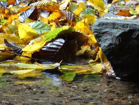 Herbst im Waldviertel