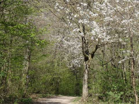 Wanderweg im Wienerwald