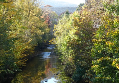 Fluss Schwechat bei Baden