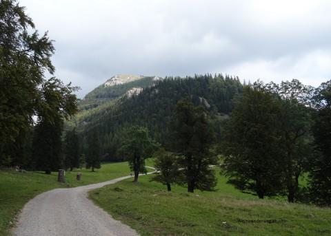 Gutensteiner Alpen, Reisalpe, Weg