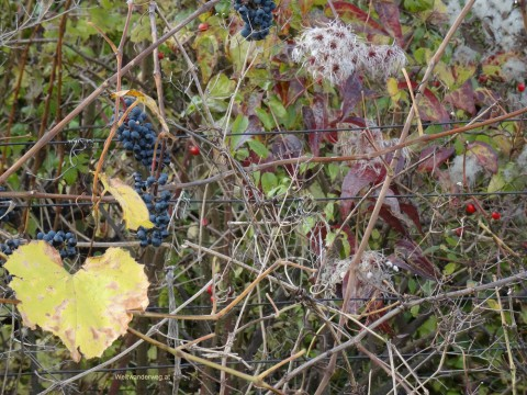 November auf dem Eichkogel in Niederösterreich