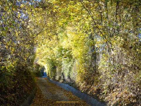 Weg auf dem Bisamberg