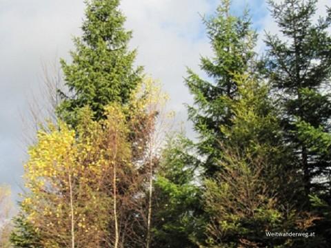 Waldviertler Wald bei Bärnkopf, Niederösterreich