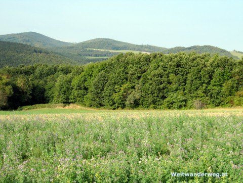 Landschaft im Burgenland bei Kobersdorf