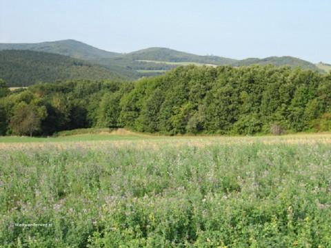 Landschaft südlich von Sieggraben, Burgenland