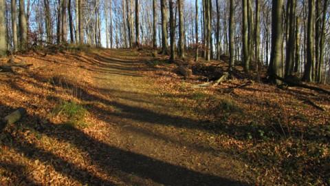 Wienerwald bei Heinratsberg