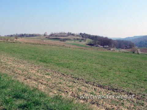 Wachaulandschaft bei Oberbergern, Niederösterreich