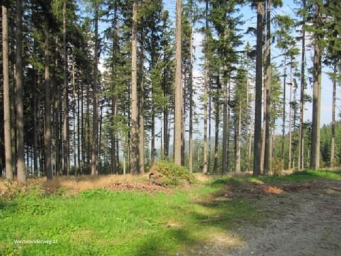Wald zwischen Masenberg und Hartberg in der Steiermark