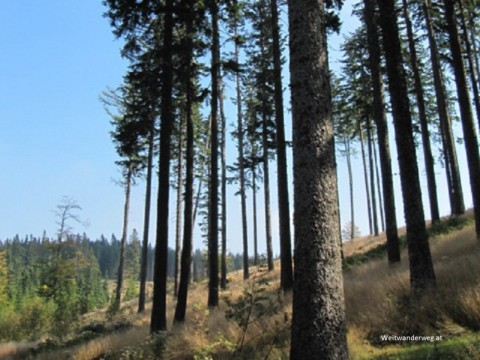 Wald bei Hartberg in der Steiermark