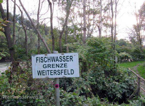 Mur Auwald Südsteiermark bei Weitersfeld