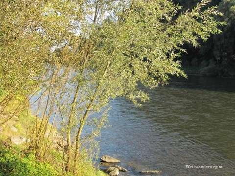 Fluss Mur, Murauen, Südsteiermark