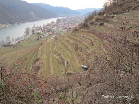 Wachau Weinberge an der Donau