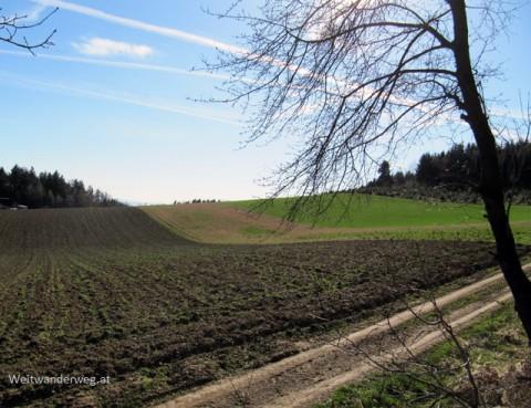 Landschaftsmotiv Jauerling Hochplateau Wachau Niederösterreich