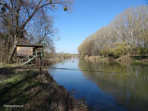 Fluss March bei der Thaya Mündung