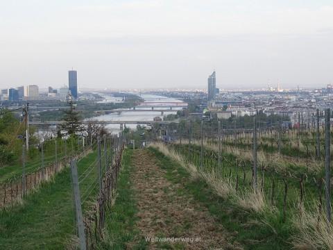 Blick aus dem Weinberg zwischen Kahlenbergdorf und Nussdorf in Wien Döbling