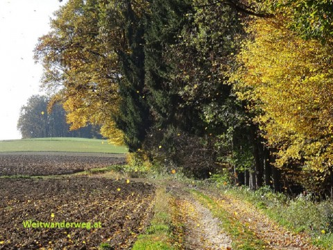 Herbstlicher Waldrand im Nibelungengau bei Krummnussbaum